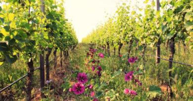 Weingut Eymann: Ein starkes Stück Pfalz