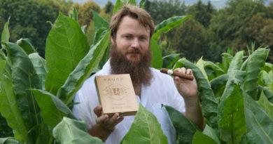 Steiermark: Tabakanbau kommt auf leisen Sohlen kommt zurück
